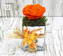 Orange Rose (Long-Life)