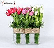 Charming Tulips